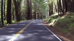 Kaunis ajaa läpi Kalifornian Redwood metsä POV osa 2 024 Arkistovideo