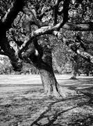 interesting intricate elm tree - stock photo