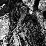 Stock Photo of interesting intricate elm bark