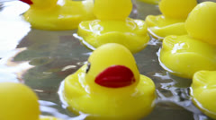 Rubber Duckies Floating in a Pool of Moving Water 1080p Stock Footage
