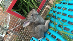 Small rabbit in the cage (2) Stock Footage