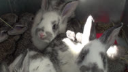 Stock Video Footage of Small rabbits in the cage (1)