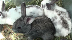 Small rabbits in the cage (2) Stock Footage