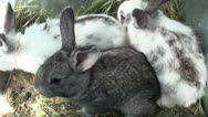 Stock Video Footage of Small rabbits in the cage (2)