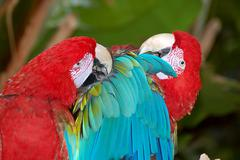 Parrot Buddies - stock photo