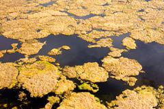 Algae on water surface Stock Photos