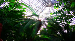 Botanical Garden Jungle Dolly (part 2) Stock Footage