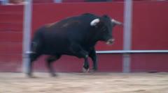 fighting bull - stock footage