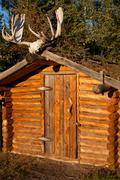 Log cabin with moose antler Stock Photos