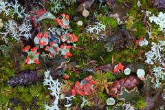 forest floor - stock photo