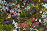 Stock Photo of forest floor