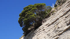 Tree on Cliff Stock Footage