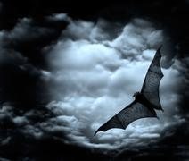 bat flying in the dark cloudy sky - stock photo