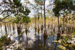 Everglades maisemia Kuvituskuvat
