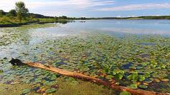 Shabbona Lake State Park Illinois Stock Footage