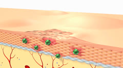 human skin cells & hair follicles structure. - stock footage