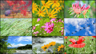 Stock Video Footage of Four season collage.