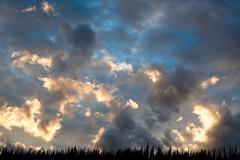 sunset over boreal forest - stock photo