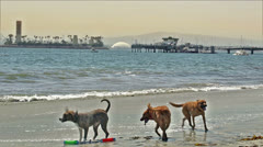 Dogs at Beach Shake off Stock Footage