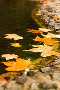 lake with fallen leaves - stock photo