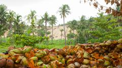 Disposed coconut husks on the ground Stock Photos