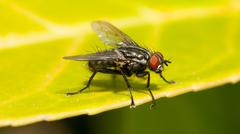 common house fly - stock photo