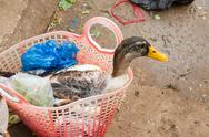Stock Photo of duck bought for consumption on a vietnamese market