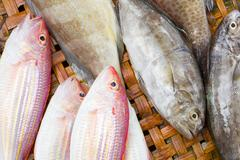 Close up of lovely fresh fish in a wet market Stock Photos