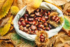 Bag of delicious chestnuts with leaves and husks Stock Photos