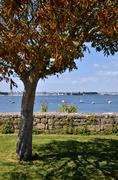 Tree in the port of Port-Louis of Brittany in France - stock photo
