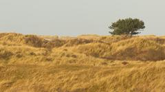 Dune landscape on the isle of ameland Stock Photos