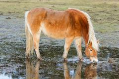Horse standing in a pool after days of raining Stock Photos
