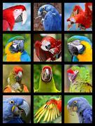 Mosaic photos of parrots Stock Photos