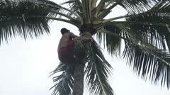 Samoan man climbing palm tree Stock Footage