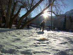 A Dog walks through the snowfall on the sunny daytime Stock Footage