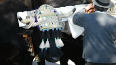 Spanish bulls on parade in andalusian pilgrimage or romeria Stock Footage