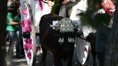 Spanish bulls and trailers on pilgrimage or romeria andalusian Stock Footage