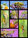 Stock Illustration of Mosaic photos of grasshoppers