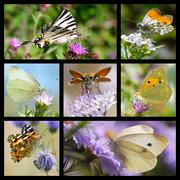 Multiple photos mosaic of butterflies - stock illustration
