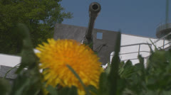 Cannon and dandelion Stock Footage