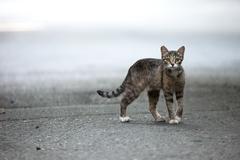 stray cat. - stock photo