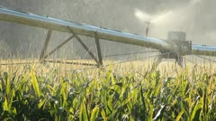 Sprinkler Irrigating Corn Field Stock Footage