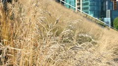 Urban Green Roof, Vancouver, BC Stock Footage