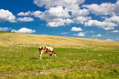 single cow in green nature - stock photo