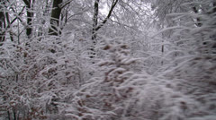 Snowy beech forest - vehicle shot Stock Footage