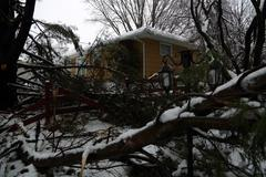 Snowstorm damage to tree. Stock Photos
