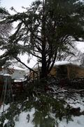 Snowstorm damage to tree and fence verticle view Stock Photos