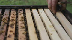 Honey Comb with Bees Pulled out of Apiary HD Stock Footage