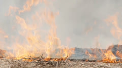 Dry grass is burning Stock Footage