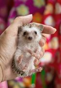 hand holding hedgehog - stock photo